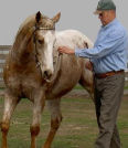About Australia Horsemanship with Norm Glenn