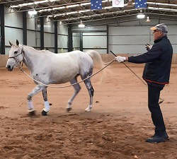 natural horsemanship - horsemanship training